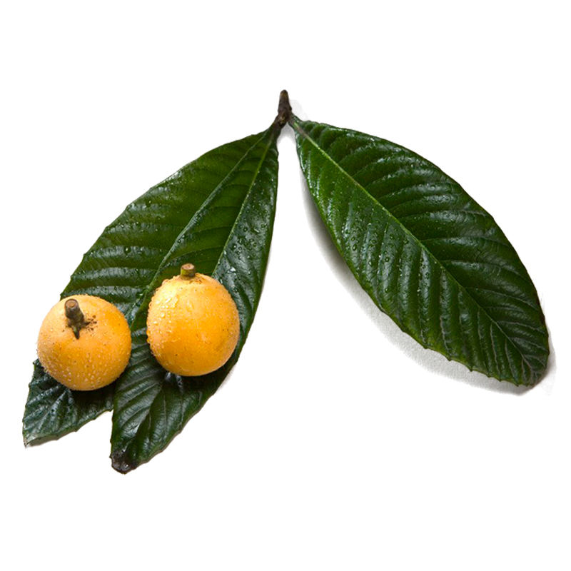 Loquat Leaves Extract